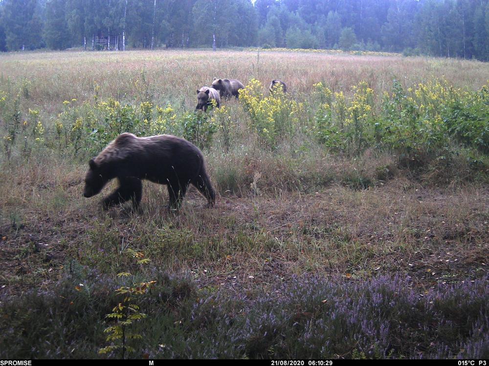 2 Медведица с медвежатами_PICT0297.JPG
